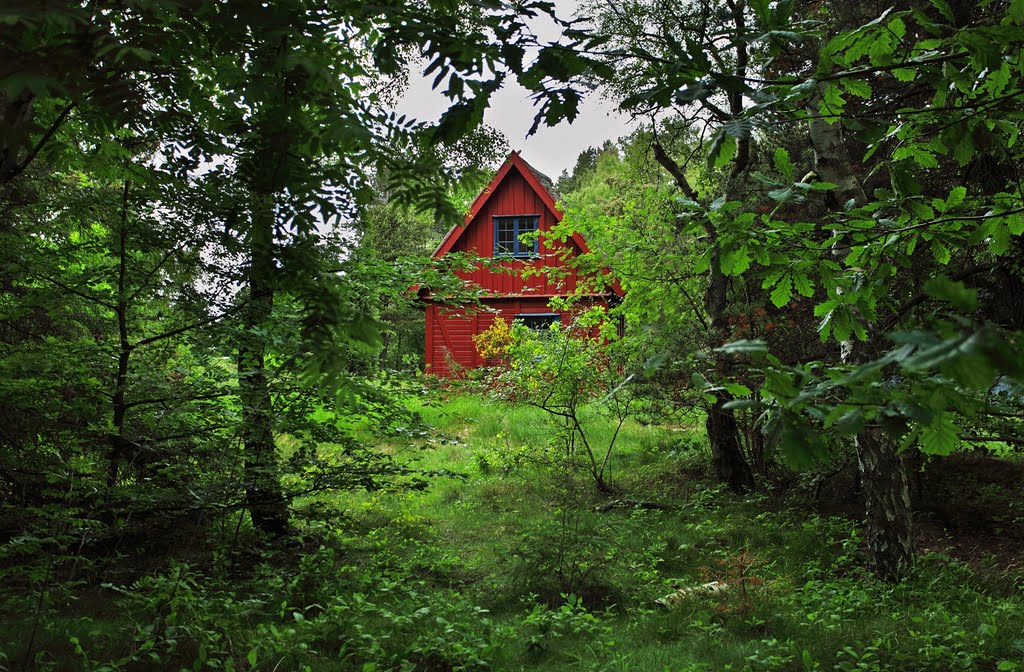 forest with a red house